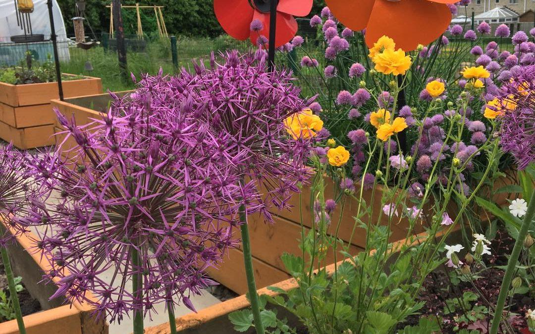 Volunteering in the Sensory Garden